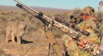 Κυνηγοί συναντήθηκαν με αγριόγατα και έμειναν εντελώς ακίνητοι! Δείτε τι συνέβη μετά (video)