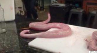 Απίστευτο: Φίδι επιτίθεται στον σεφ που ετοιμάζεται να το μαγειρέψει! (Βίντεο)