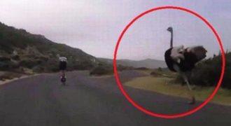 Το μπιπ- μπιπ υπάρχει και κυνηγά ποδηλάτες! (Video)