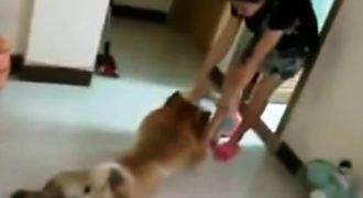 Αυτός ο σκύλος κάνει τον πεθαμένο! Δείτε γιατί (Βίντεο)