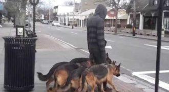 Βγαίνει βόλτα με τους σκύλους του χωρίς λουριά. Θα σας αφήσει άφωνους η συμπεριφορά τους.