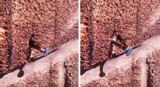 «Βιονική» σφήγκα ξεκολλάει πρόκα από τον τοίχο! (Video)