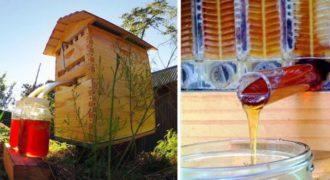 Κυψέλη μαζεύει αυτόματα το μέλι μόνη της και χωρίς να ενοχλεί τις μέλισσες!