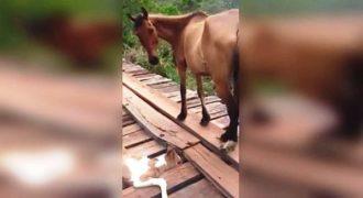 Ένας άνδρας έσωσε το αβοήθητο αλογάκι που παγιδεύτηκε σε μια γέφυρα