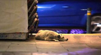 Η Αθήνα μέσα από τα μάτια ενός αδέσποτου σκύλου σε ένα καταπληκτικό βίντεο.