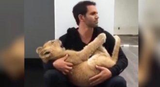 Η απίστευτη αγκαλιά λέαινας στον άνθρωπο που τη φροντίζει!