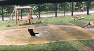 Η πρώτη ημέρα μιας αρκούδας που ήταν χρόνια κλειδωμένη σε ένα κλουβί. (Βίντεο)