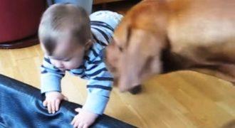 Μωρό ξαπλώνει στο κρεβατάκι του σκύλου. Η αντίδρασή του; ΞΕΚΑΡΔΙΣΤΙΚΗ!