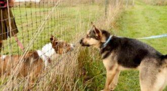 Αυτά τα 2 σκυλιά μεγάλωσαν μαζί ώσπου μια μέρα οι δρόμοι τους χώρισαν. Αυτό που συμβαίνει όταν ξανασυναντιούνται είναι απλά ΕΚΠΛΗΚΤΙΚΟ!