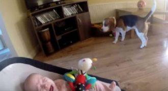 Το μωρό άρχισε να κλαίει, όταν ο σκύλος του πήρε τα παιχνίδια: Τι έκανε για να επανορθώσει;
