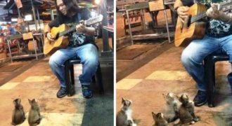 4 γάτες που αγαπούν τη μουσική ακούν ένα μουσικό του δρόμου που όλοι οι άλλοι τον αγνόησαν!