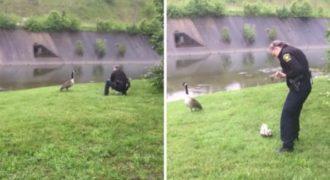 Μια μητέρα χήνα «καλεί» έναν αστυνομικό για ένα πολύ επείγον λόγο. (Video)