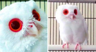 Αυτή η κουκουβάγια έχει γίνει Viral στο διαδίκτυο με τα κόκκινα μάτια της. (Video)