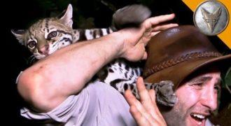 Παρουσιαστής εκπομπής είχε μια συνάντηση με άγριο Οσελότο που θα του μείνει αξέχαστη