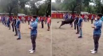 Δάσκαλος απόδειξε σε 40 μαθητές ότι οι ταύροι δεν επιτίθενται αν δεν τους επιτεθείς.