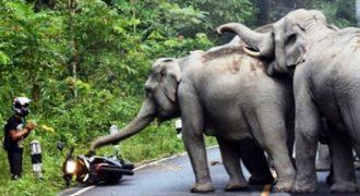 Ελέφαντες χάρισαν την ζωή ενός μοτοσικλετιστή που ικέτευε για τη ζωή όταν τον στρίμωξαν στην γωνία.
