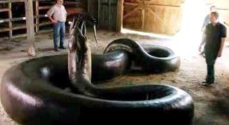 Ανακόντα: Το μεγαλύτερο φίδι που έχει εμφανιστεί ποτέ στη Γη (Βίντεο)