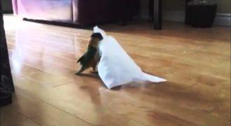 Ξεκαρδιστικό! Δείτε την Η αντίδραση του Παπαγάλου όταν βρήκε ένα κομμάτι χαρτί στο πάτωμα.(Βίντεο)