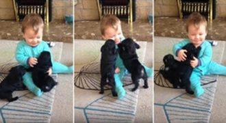 Δύο κουταβάκια pugs κάνουν επίθεση αγάπης σε αυτό το μωράκι. (Βίντεο)