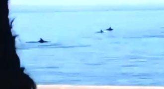 Σπάνια στιγμή σε βίντεο με δελφίνια να κολυμπούν στο Θερμαϊκό!