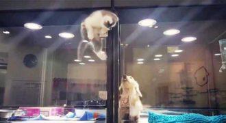 Αυτό το γατάκι δραπέτευσε από το κλουβί του για να συναντήσει τον μοναχικό σκύλο δίπλα του.