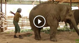 Ετοιμάζεται να «χτυπήσει» τον ελέφαντα από πίσω. Δείτε τώρα την αντίδραση του ελέφαντα και θα μείνετε άφωνοι!
