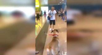 Δεν είχε Δει τον Σκύλο του για 3 Ολόκληρα Χρόνια. Τώρα ΔΕΙΤΕ την Στιγμή που τον Ξανασυναντά… (Βίντεο)