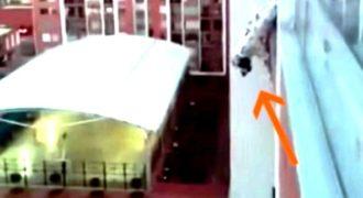 Σκύλος κρέμεται από τον 13ο όροφο Πολυκατοικίας. Τότε ο Άντρας που καθόταν στο διπλανό μπαλκόνι κάνει ΚΑΤΙ Μοναδικό..!