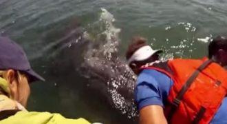 Πλησίασαν με τη Βάρκα τους το Μωρό μιας Φάλαινας. Μόλις όμως είδαν ΤΙ βρισκόταν από κάτω του. Πάγωσαν..!