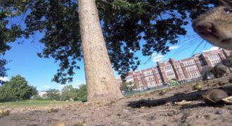 Σκίουρος κλέβει μία κάμερα GoPro και καταγράφει την διαφυγή του