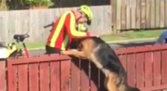 """Ο ταχυδρόμος και αυτός ο """"παρεξηγημένος"""" σκύλος μοιράζονται μια πολύ συγκινητική στιγμή."""