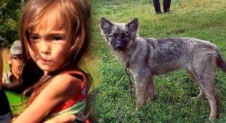 Αυτό το μικρό κοριτσάκι είχε χαθεί στα δάση της Σιβηρίας για 11 μέρες και σώθηκε από το σκυλάκι της.