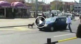 Επικό!! Ποτέ ΜΗΝ εκνευρίζετε έναν σκύλο με την κόρνα! (Video)