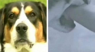 Έκανε ντους όταν ο σκύλος της μπήκε στο μπάνιο και άρχισε να την δαγκώνει και της έσωσε τη ζωή! (Βίντεο)