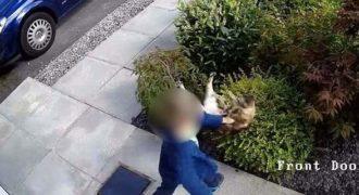 Η εκδίκηση της γάτας -Τι έκανε σε 5χρονο αγόρι που τη χτύπαγε με μίσος (Βίντεο)