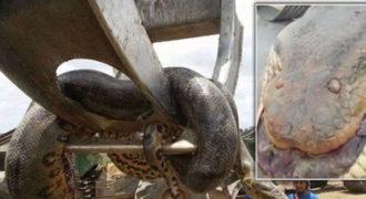 Εργάτες βρήκαν ένα γιγαντιαίο ανακόντα 10 μέτρων σε εργοτάξιο στη Βραζιλία