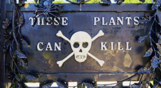 Αυτός είναι ο πιο θανατηφόρος κήπος στον κόσμο. (Video)