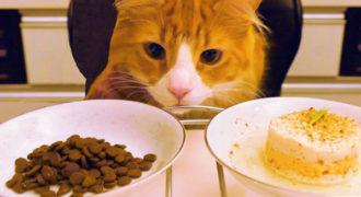 Σπιτική gourmet γατοτροφή vs τροφή του εμπορίου