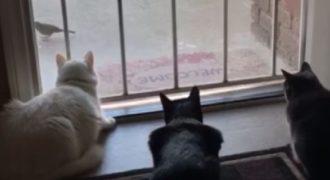 Αυτές οι γάτες κοιτούν και λιγουρεύονται ένα πουλί αλλά ξαφνικά έγινε κάτι που τις εκτίναξε στον αέρα.