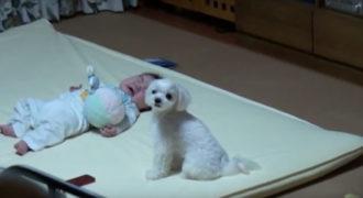 Όταν αυτό το μωρό αρχίζει να κλαίει, αναλαμβάνει ο σκύλος