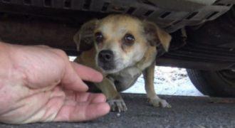 Αυτό το σκυλάκι είχε χαθεί για πέντε μέρες – Δείτε τη συγκινητική στιγμή της επανένωσής του με τον ιδιοκτήτη του (Video)