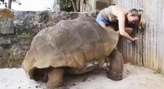 Προσπάθησε να ταΐσει μια «Τεράστια Χελώνα»!. Αυτό που έκανε μετά? Είναι η Απόλυτη Έκπληξη!..