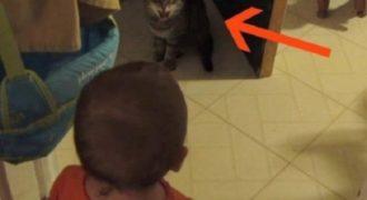 Βιντεοσκοπούσε το Μωρό της να Μιλάει στη Γάτα γιατί της Φαινόταν Αστείο. Αυτό που Συνέβη στο 0:10 θα σας Αφήσει άφωνους!