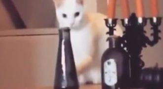 Χαμός με τη γάτα που τοποθετεί το βάζο στην θέση του μόλις καταλαβαίνει πως την βλέπει ο ιδιοκτήτης της