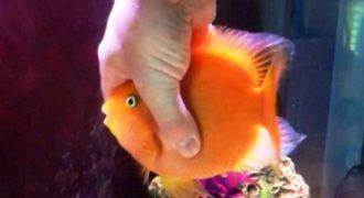 Δείτε ΤΙ κάνει και ΠΩΣ αντιδράει αυτό το Ψάρι Κάθε Φορά που Βλέπει τον Ιδιοκτήτη του και ΔΕΝ θα Πιστεύετε στα Μάτια σας! [Βίντεο]