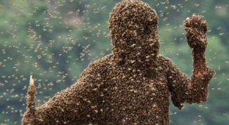Γυναίκα κάθεται ατάραχη ενώ δέχεται επίθεση από σμήνος μελισσών! [Βίντεο]