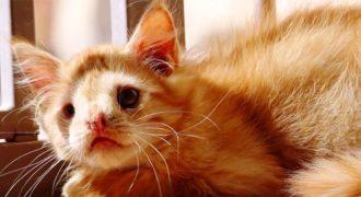 Γατάκι εγκαταλελειμμένο λόγω της ασχήμιας του βρήκε επιτέλους την αγάπη που του αξίζει