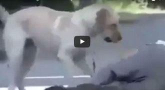ΕΚΠΛΗΚΤΙΚΟ: Το αφεντικό του σκύλου προσποιείται οτι λιποθυμάει. Η αντίδραση του σκύλου μας άφησε άφωνους (VIDEO)