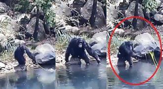 Χιμπατζήδες χρησιμοποιούν κλαδιά για ψάρεμα και εκπλήσσουν τους επιστήμονες!!! (Βίντεο)