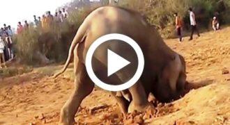 Μια ελεφαντίνα έσκαβε μια τρύπα για 11 συνεχόμενες ώρες, αυτό που έγινε στη συνέχεια δείχνει τι θα πει «αγάπη της μάνας»